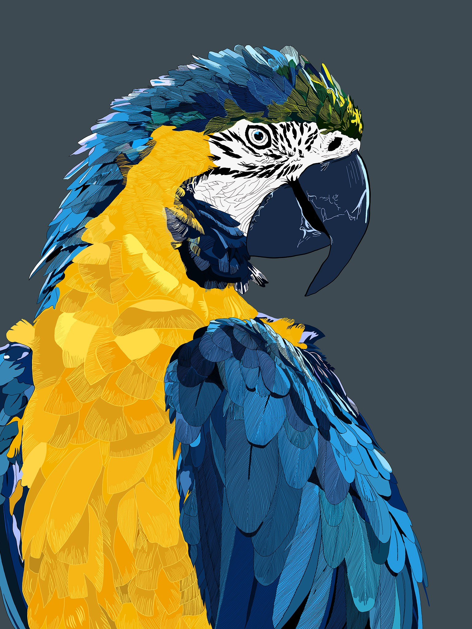 Une illustration de perroquet aux plumes bleues et jaunes